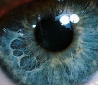 vista y visión